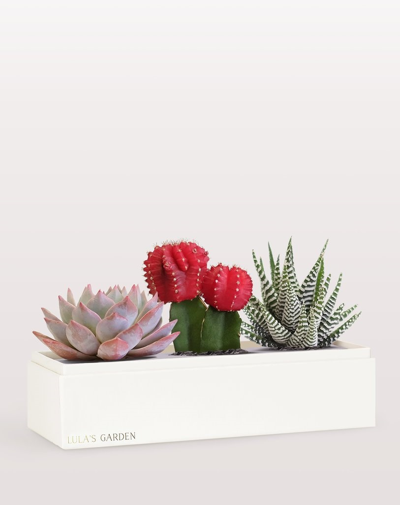 It's A Date: Flirty Looks + Gifts for Valentine's Day, Galentine's Day Gifts, Lula's Garden love succulent garden